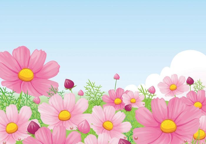 Vacker Rosa Daisy Bakgrund Vector