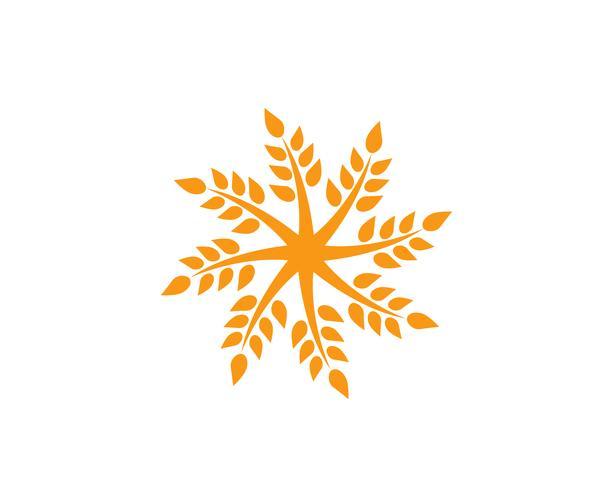 Jordbruk vete Logo Mall, hälsosam livslogo vektor ikon design