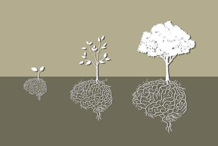 Jungpflanze mit Gehirnwurzel, Vektor