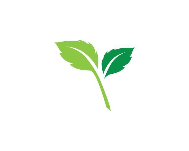 Logos der grünen Baumblattökologie vektor
