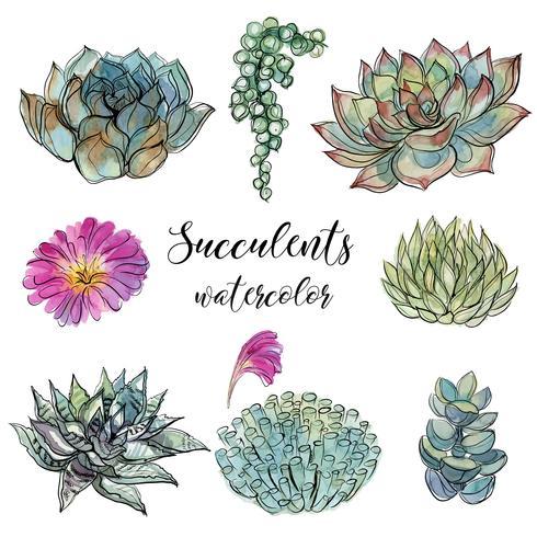 Sats av succulenter. Vattenfärg. Graphics.Isolated objects. Vektor illustration.