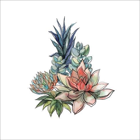 Bukett med succulenter. Blommarrangemang för design. Vattenfärg. Grafik. Vektor. vektor