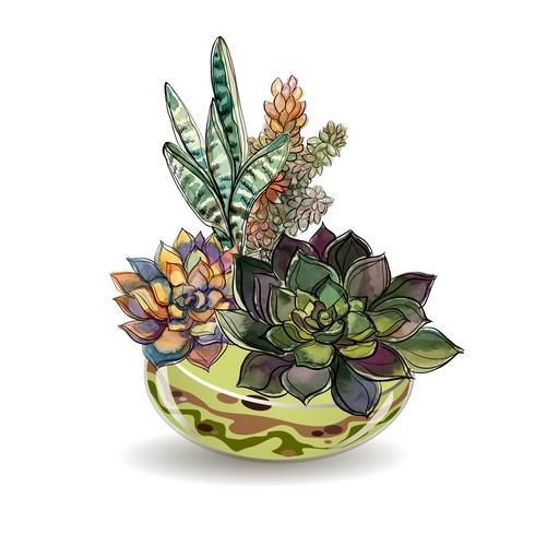 Succulenter i glas akvarier. Färgad sand. Blomma dekorativa kompositioner. Grafik. Vattenfärg. Vektor. vektor