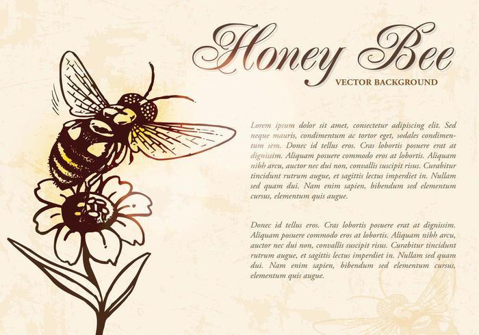 Honigbienen-Hintergrund-Vektor vektor
