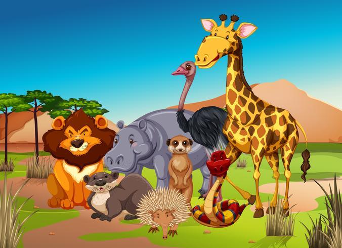 Många djur på gräsmarken vektor