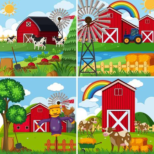 Vier Szenen mit Kühen und Scheunen vektor