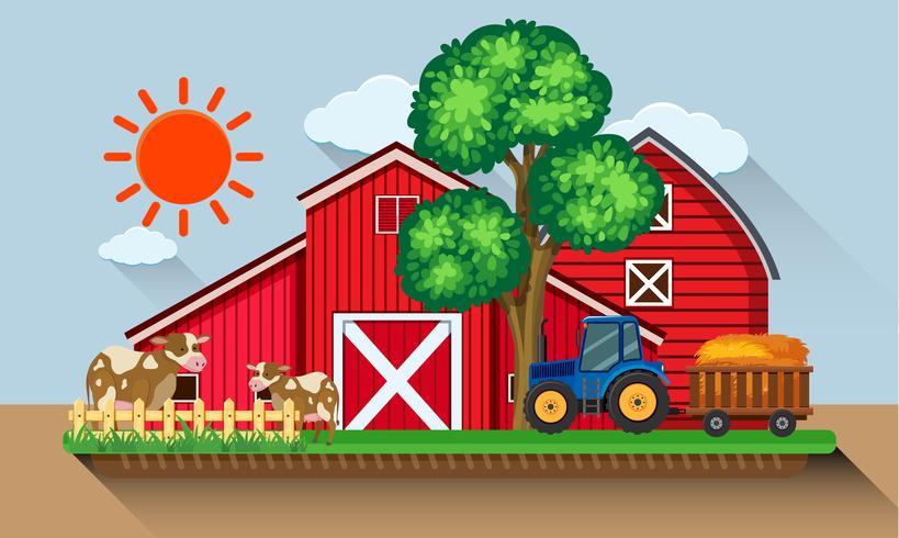 Hof mit Kühen und blauem Traktor vektor