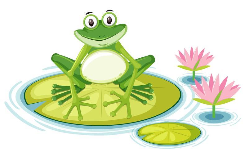 Kostenlos frosch bilder Frosch Malvorlage