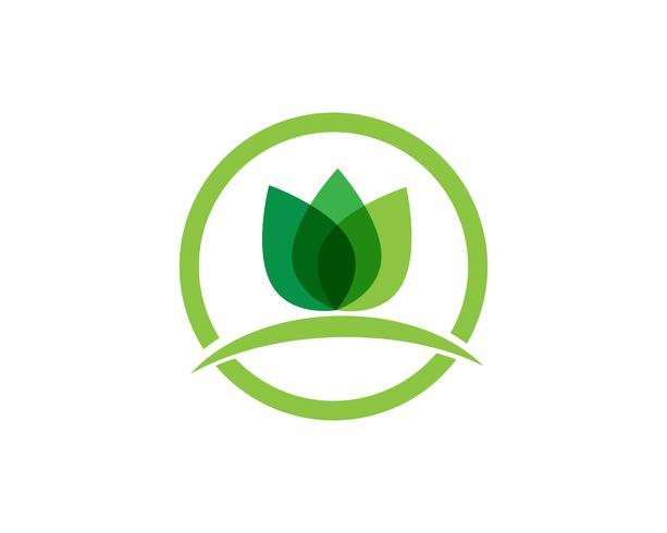 Lotus skönhet Sign för Wellness, Spa och Yoga. Vektor illustration