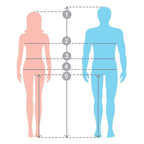 Silhuetter av män och kvinnor i full längd med mätlinjer av kroppsparametrar. Man och kvinnor storlekar mätningar. Stock vektor tecknad illustration. Människokroppsmätningar och proportioner.