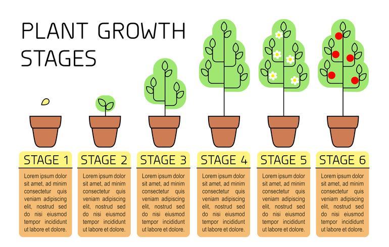 Pflanzenwachstum inszeniert bunte Infografiken. Linie Kunstikonen. Pflanzanleitung Vorlage. Lineare Artillustration lokalisiert auf Weiß. Obst pflanzen, Gemüse verarbeiten. vektor