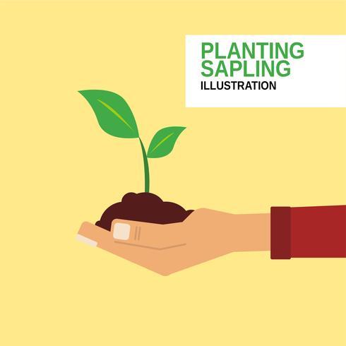 Plantering Sapling vektor