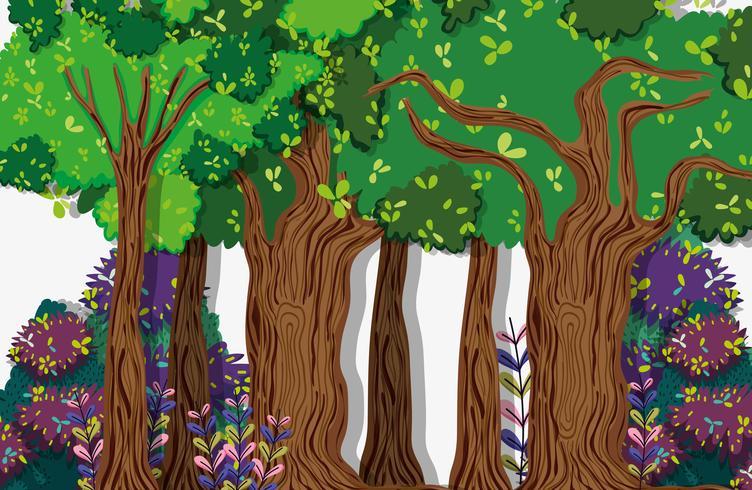 Vackert skogslandskap vektor