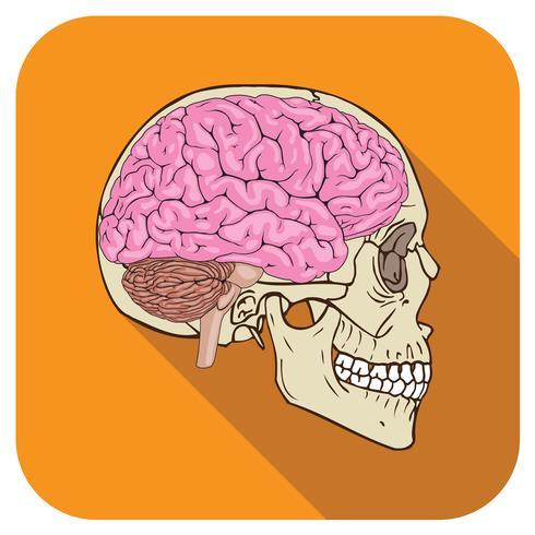 Gehirnsymbol orange vektor