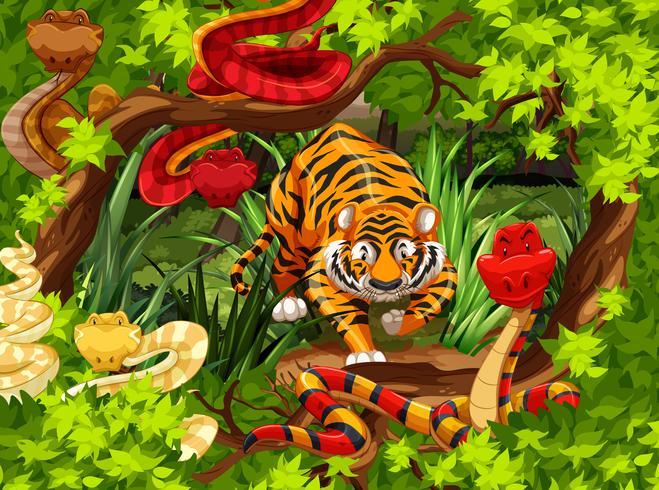 Vilda ormar och tiger i skogen vektor