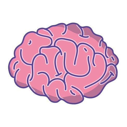 menschliche Gehirn Anatomie kreativ und Intellekt vektor