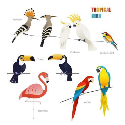 tropisk fågeluppsättning vektor