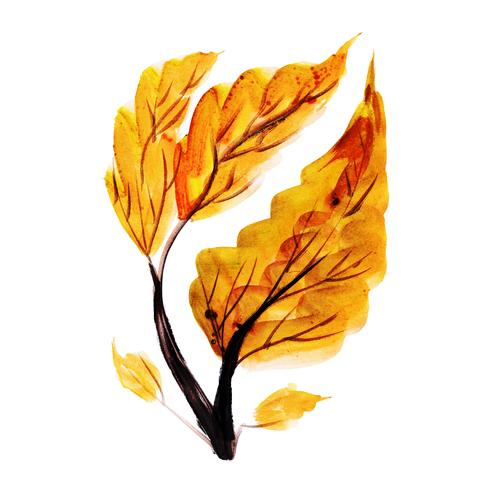 Schönes Aquarell Autumn Element vektor