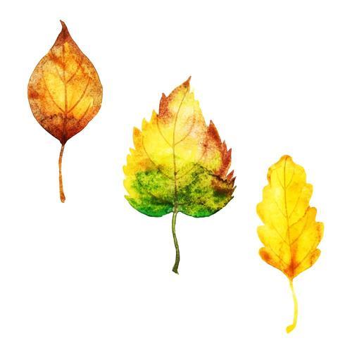 Herbstlaub-Sammlung vektor