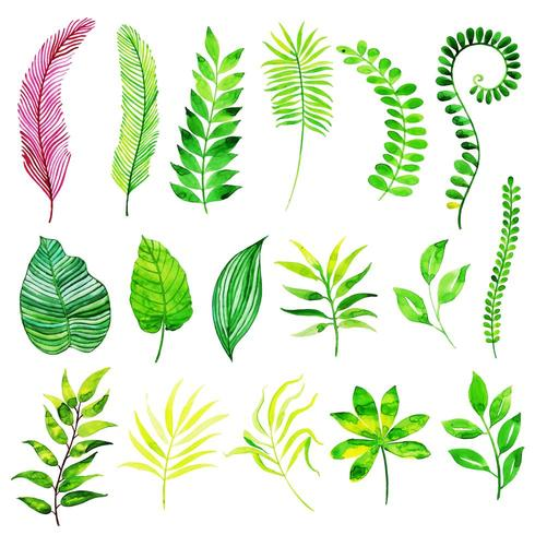 Akvarell Summer Leaves Elements Collection vektor
