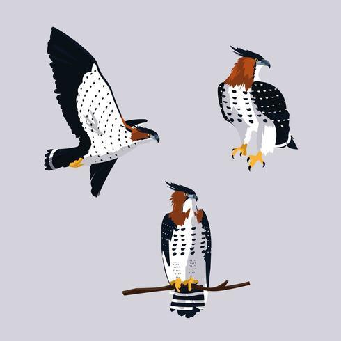 införa hökfåglar med olika poser vektor