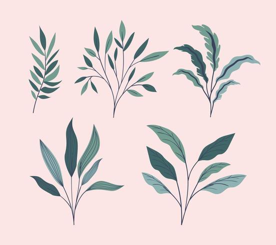 grüne Blätter natürliche Set Symbole vektor