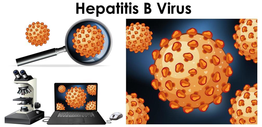 Close up isoliertes Objekt des Virus Hepatitis B vektor