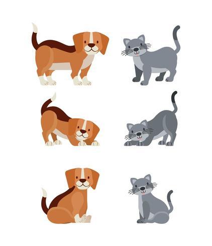 katt och hund set vektor