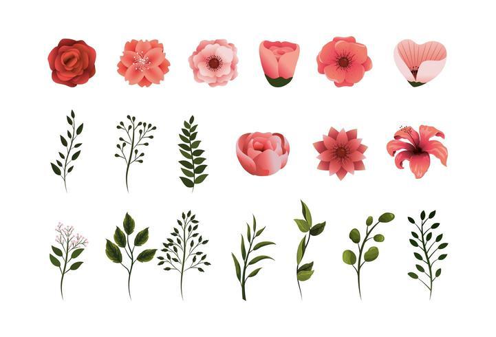Set tropische Blumen Pflanzen mit Blütenblättern und Blättern vektor