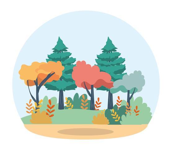 Kiefern und Bäume mit Zweigen, Blättern und Büschen vektor