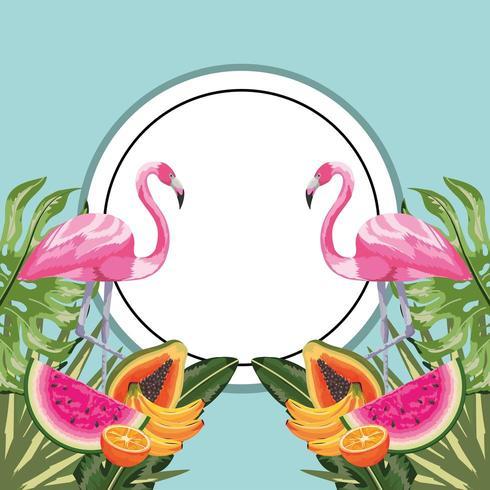 Kreisaufkleber mit Flamingo und tropischen Früchten vektor