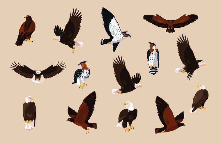 hökar och örnar fåglar med olika poser vektor