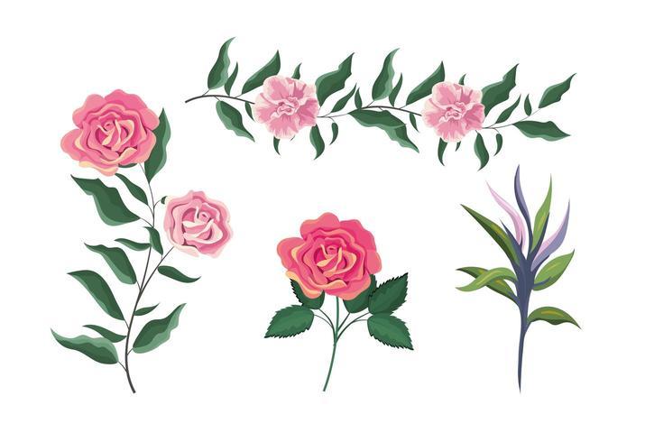 Set exotische Rosenpflanzen mit Blättern vektor