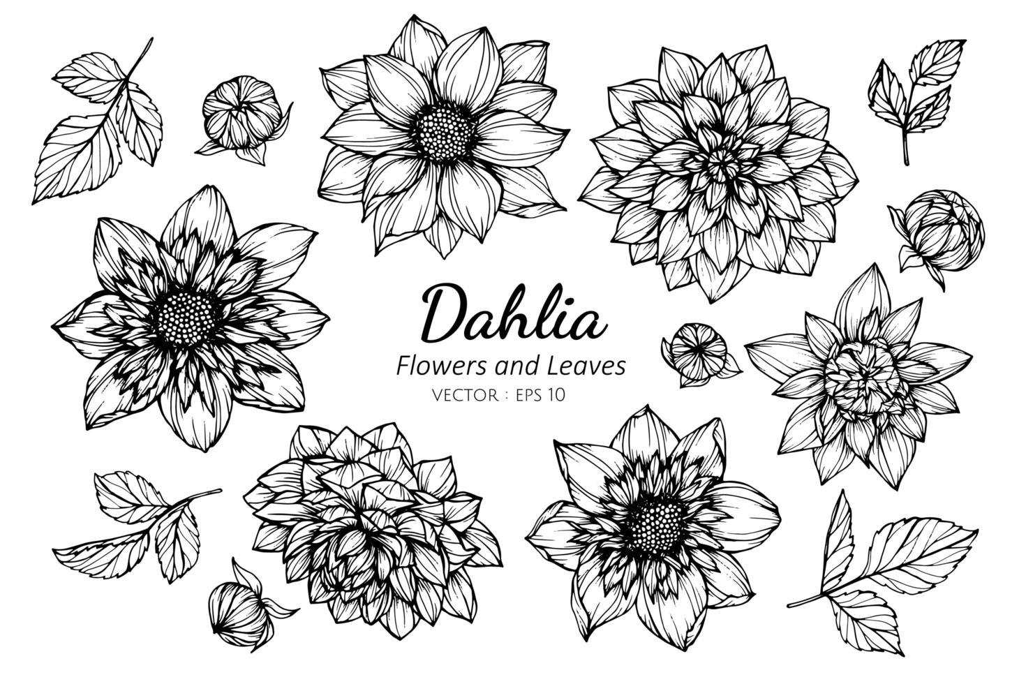 Sammlung von Dahlienblüten und -blättern vektor