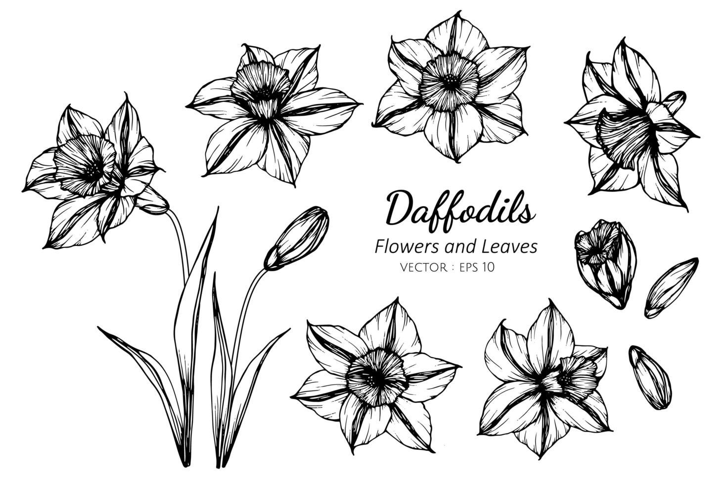 Sammlung Narzissen Blume und Blätter vektor
