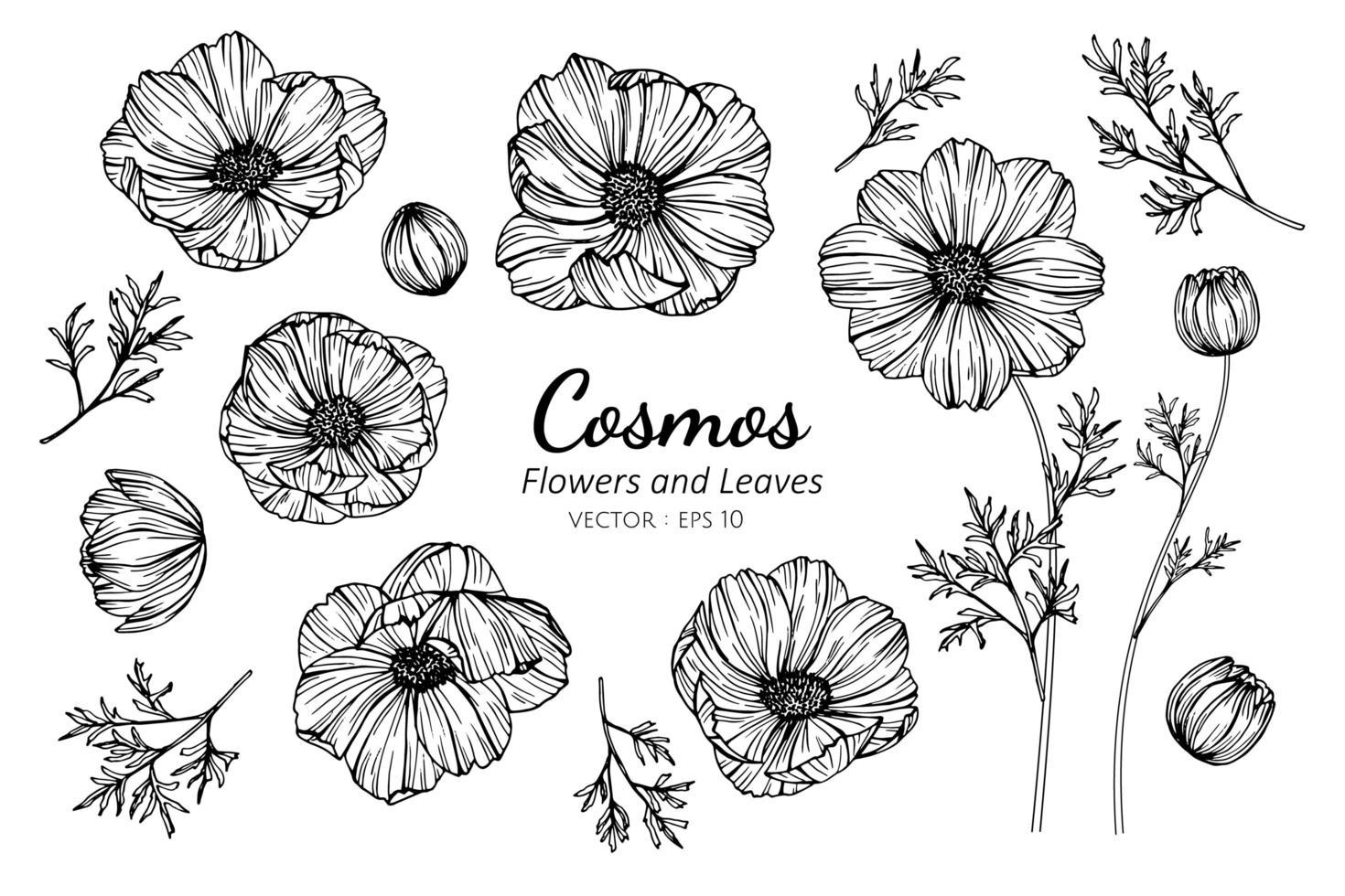 Sammlung von Kosmosblumen und -blättern vektor