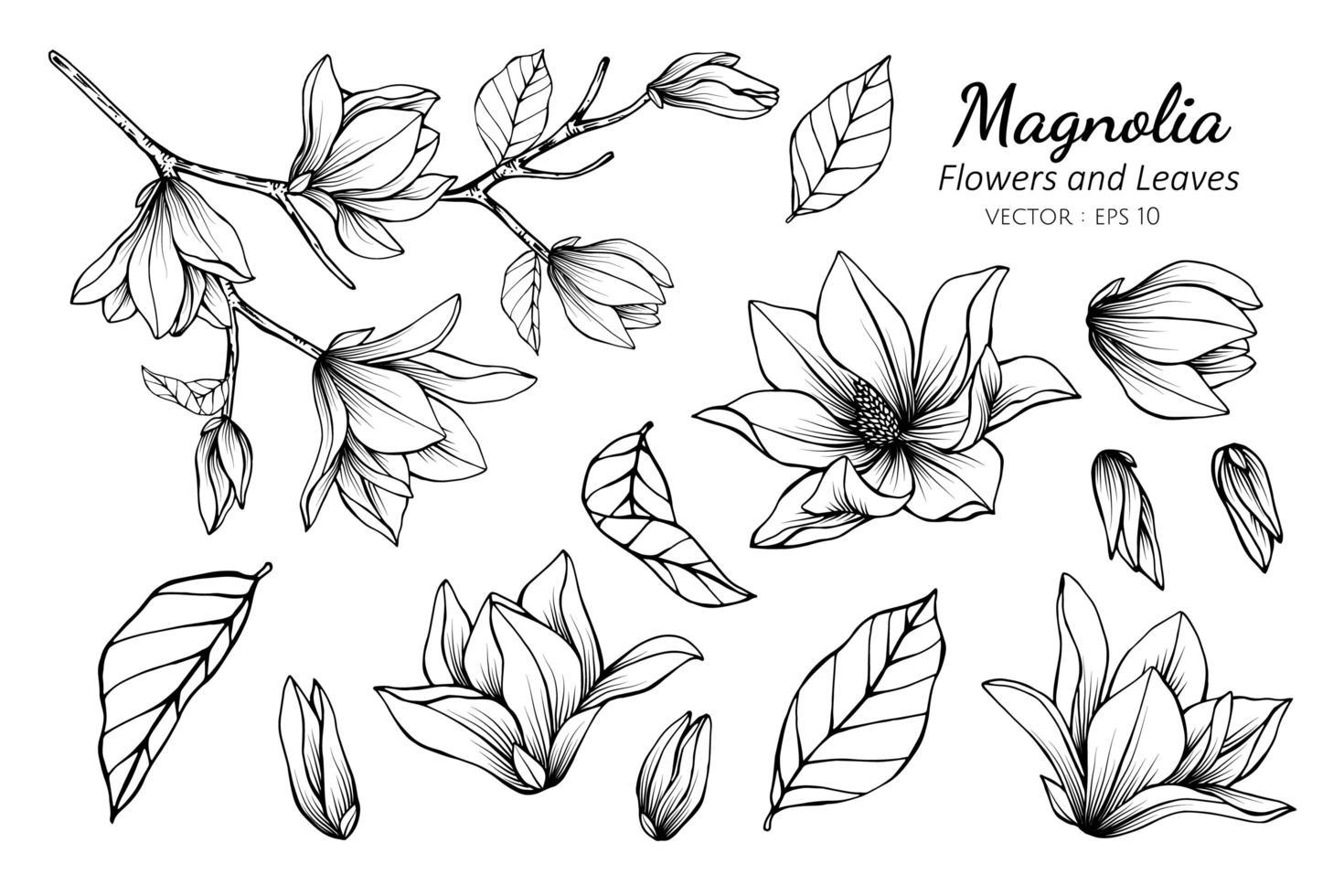 samling av magnolier och blad vektor