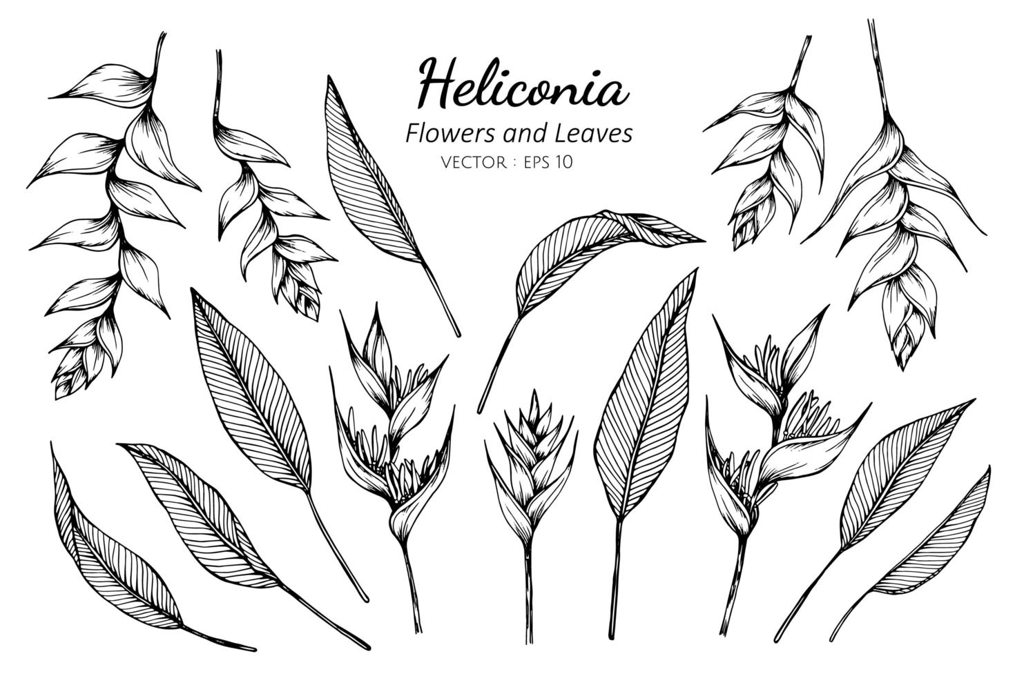 Sammlung von Heliconia Blüten und Blättern vektor