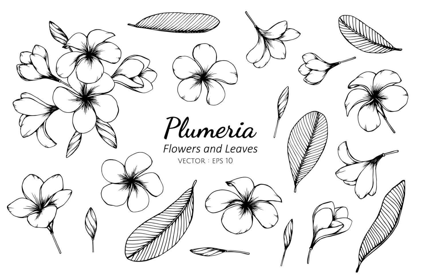 Sammlung von Plumeria Blüten und Blättern vektor