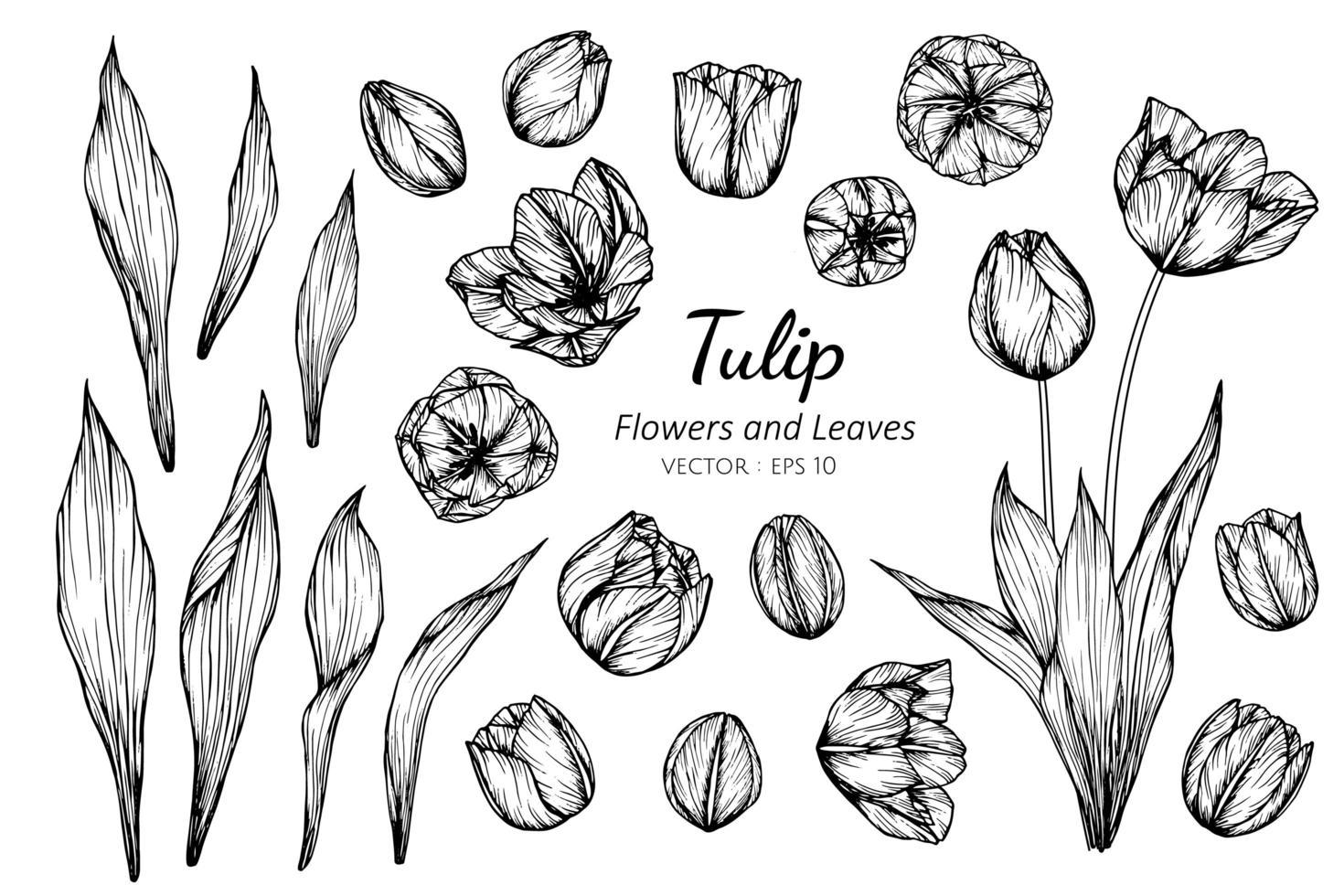 samling av tulpanblommor och blad vektor