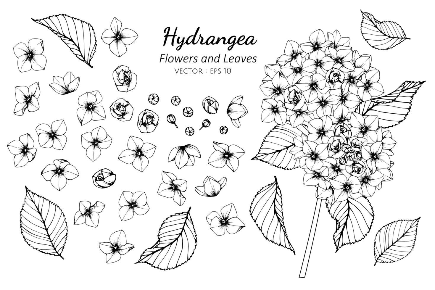 Sammlung von Hortensienblüten und -blättern vektor