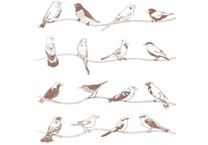 Handgezeichnete Vögel Vektoren