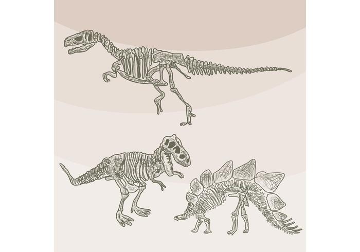 Dinosaurier-Knochen-Vektoren vektor