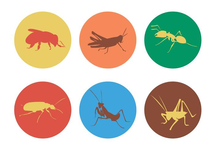 Vector Insekter