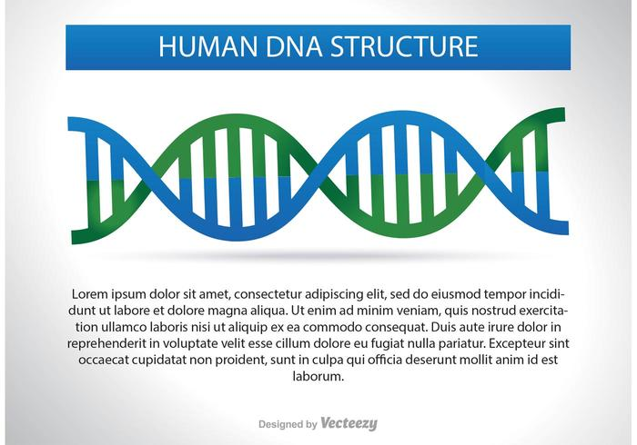 DNA-Struktur-Illustration vektor