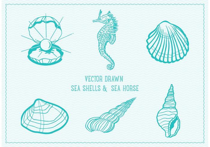 Gratis Vector Drawn Sea Shells