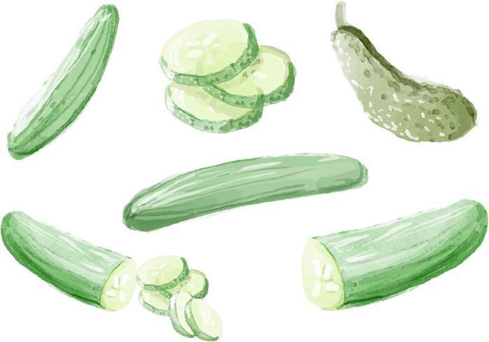 Aquarell Gurken Vektoren