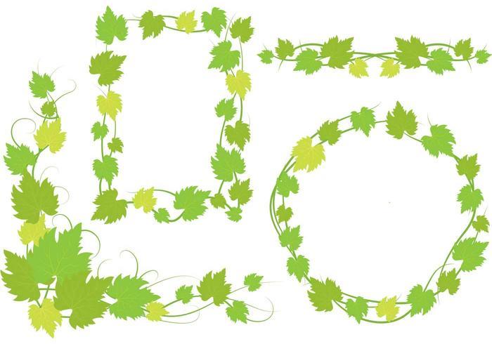 Murgröna vinstockar designer vektor
