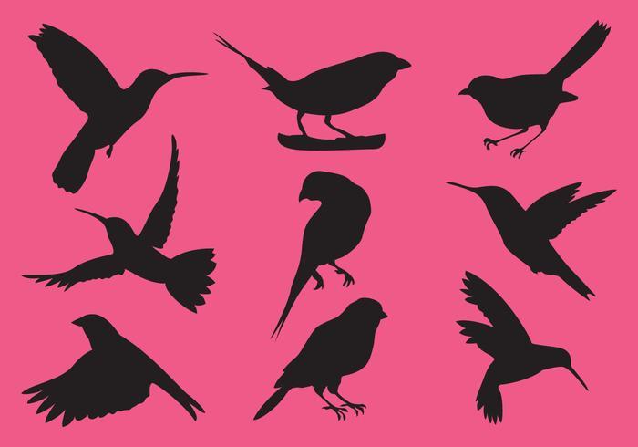 Kleine Vogelvektoren vektor