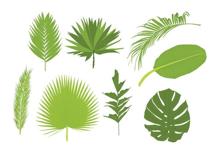Palm Blätter Vektoren